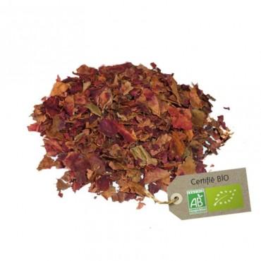 Vigne rouge feuilles Bio
