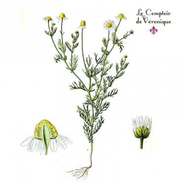 Camomille matricaire fleurs Bio