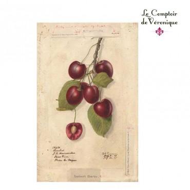 Cerisier - Queue de Cerise
