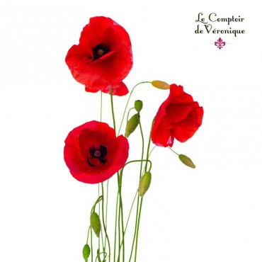 Coquelicot Fleurs Bio