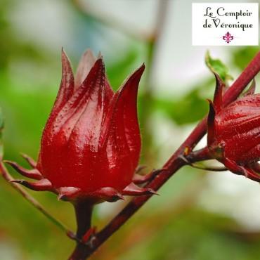 Hibiscus fleurs Bio