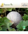 Melon Sucrin de Tours - semences bio