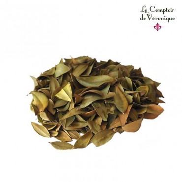 Myrte feuilles