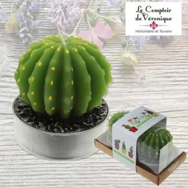 Lot de 2 bougies Cactus Echinopsis