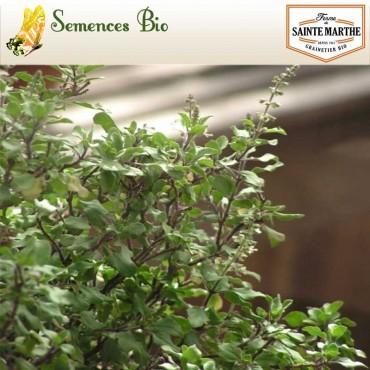 Basilic Sacré / Tulsi - semences bio