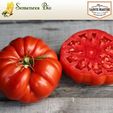 Tomate Couilles de Taureau - semences bio