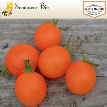 Tomate Orange Berry - semences bio
