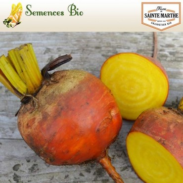Betterave Burpees Golden - semences bio