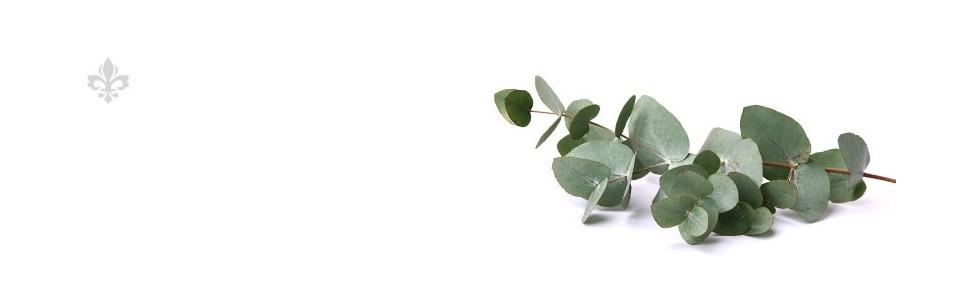 Plantes en vrac E